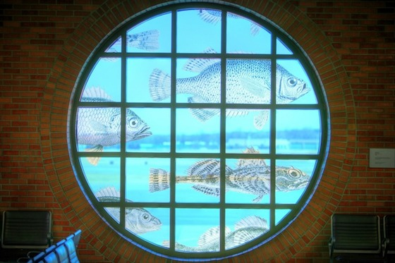 "New York's Albany International Airport (ALB) has no permanent works of art in its collection, but its many gallery spaces and exhibition cases stay filled with the work of local and regional artists and loans from area museums. Among the works on indefinite loan is ""Flying Fish"", by Lillian Mulero, which turns a ten-foot, round concourse window into an aquarium."